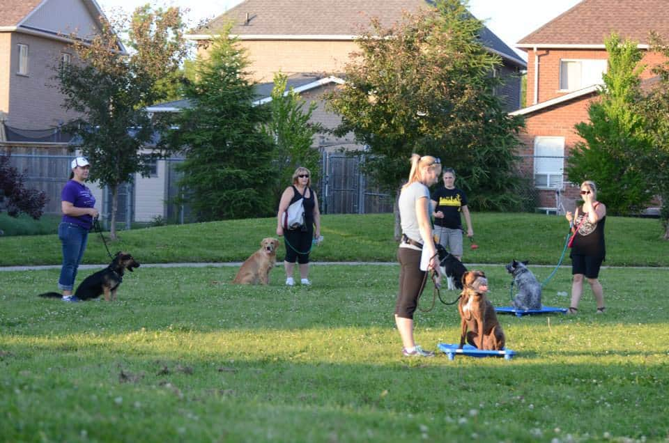 Good Doggy Training Lessons Newcastle