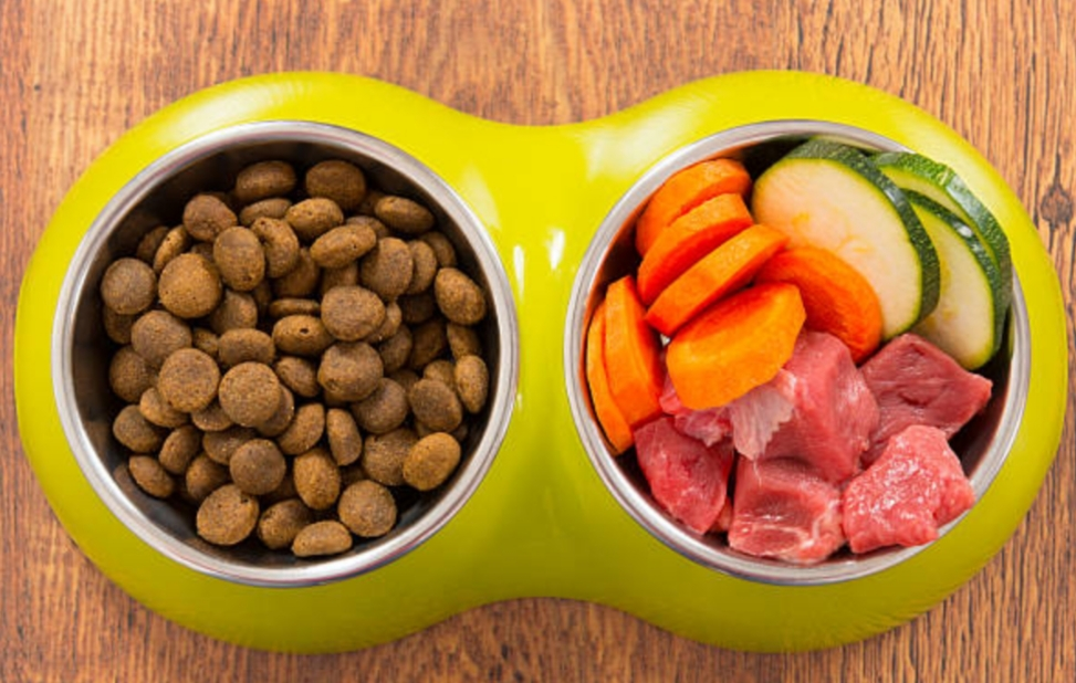 Nutrition & Dogs